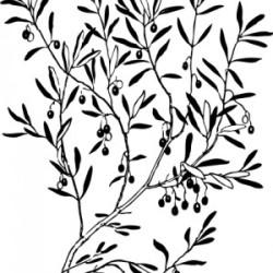 Campagna olearia Abruzzo