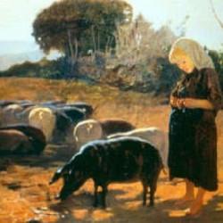 maiale nero d'Abruzzo