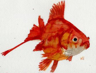 pesce fresco congelato