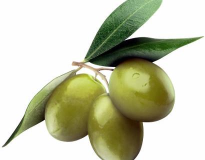 qualità dell'olio olive 2