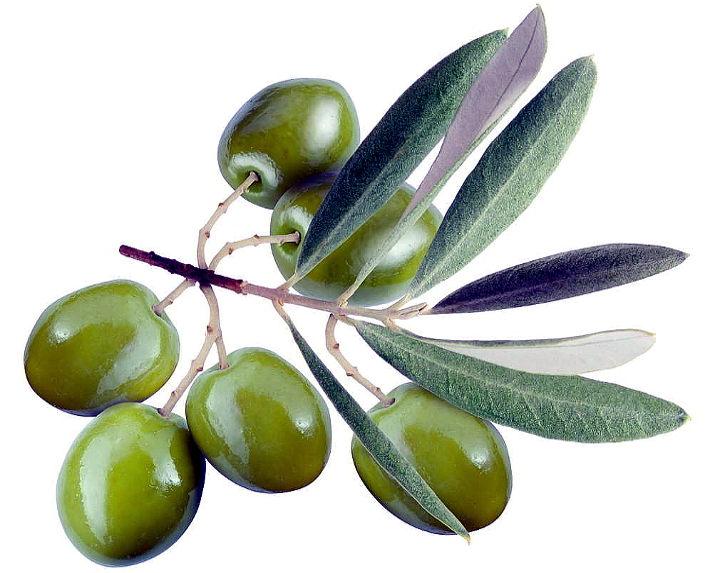 qualità dell'olio ramo e olive