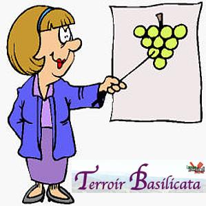 Terroir basilicata 2016 policoro