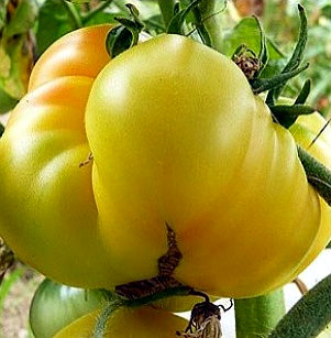 serena manzoni pomodoro 2