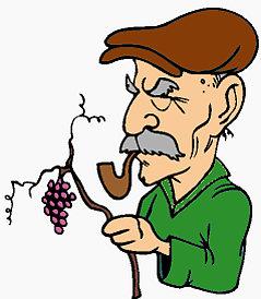 vino novello for dummies