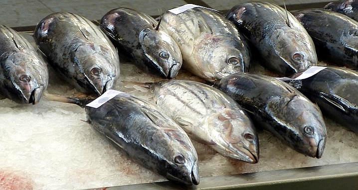 pasto quotidiano ittici