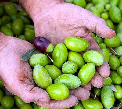 la più bella sei tu olive
