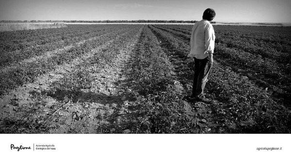 mania agricola paglione lucera Beniamino Faccilongo