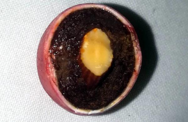 confetto al peperone dolce di Altino interno confetto