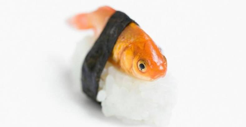 lenticchie alla julienne antonio albanese pesce rosso di copertina