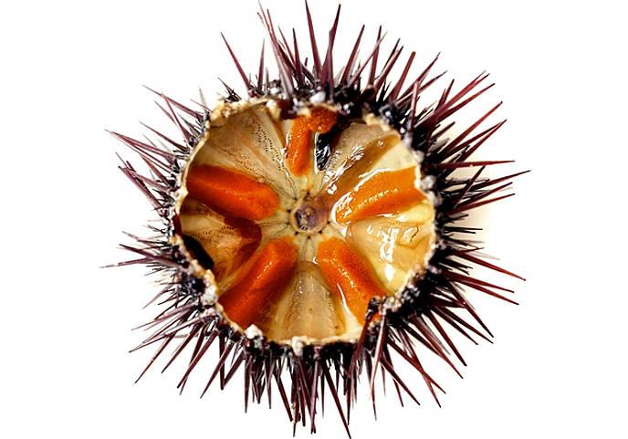 ricci di mare pescati in tavola serena manzoni
