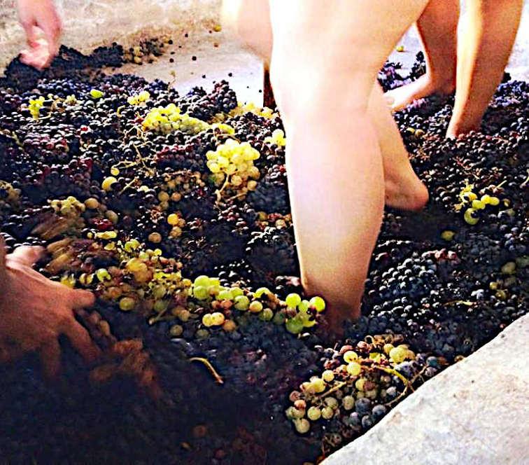 Perchè bevo vino naturale vendemmia con i piedi