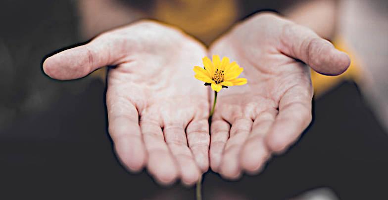 Non mi avvalgo della virtù cristiana del perdono mano con fiore